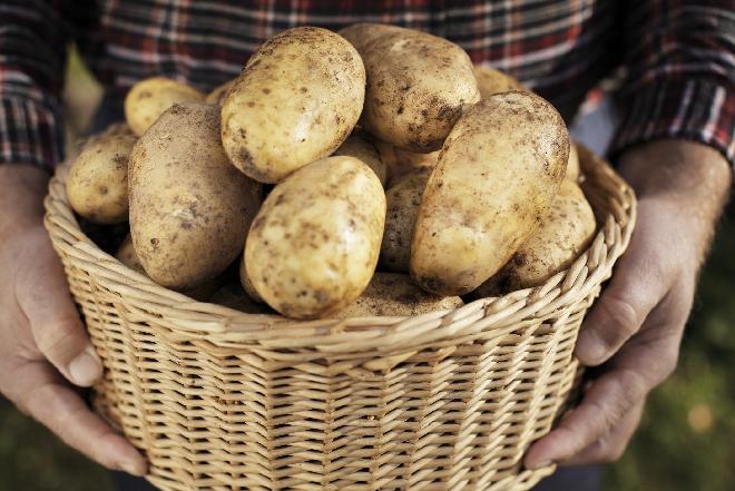 Odmiany ziemniaków: jakie ziemniaki wybrać do konkretnej potrawy?